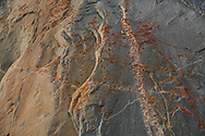Orange lichen and Ojibwe graffiti adorns Agawa Rock in Lake Superior Provincial Park, Ontario; Canada.