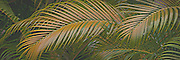 Palm fronds from an abstract 3-D design