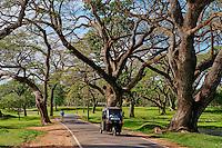 Sri Lanka, province du Centre-Nord, site d'Anuradhapura classé Patrimoine Mondial de l'UNESCO, rickshaw sous les arbres // Sri Lanka, North Central Province, Anuradhapura, rickshaw under tree