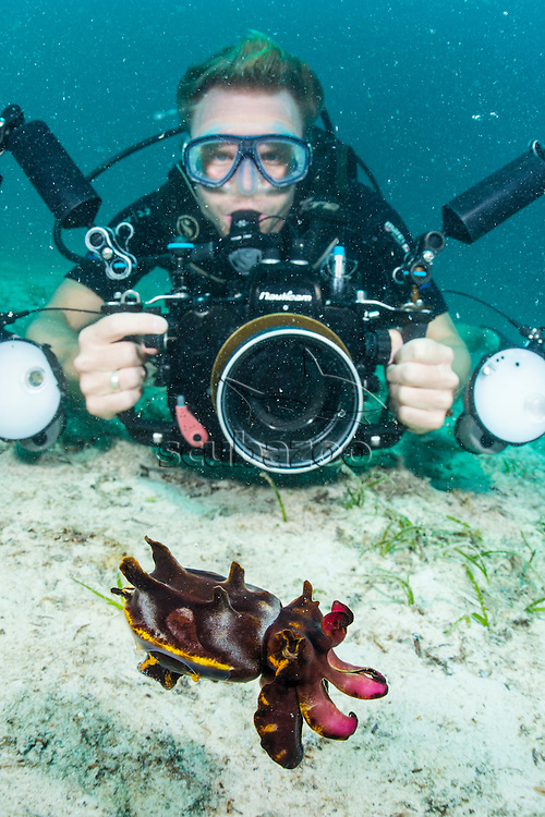 Photographer and a Flamboyant Cuttlefish, Metasepia pfefferi, Mabul, Sabah, Malaysia, Borneo, Celebes Sea,