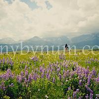 lupine meadow woman walking dog blackfeet reservation