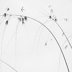 > BW ZEN Bamboo and Sky < Mindfulness