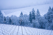 Snowy dawn at Bella Vida Vineyard, Dundee Hills AVA, Willamette Valley, Oregon