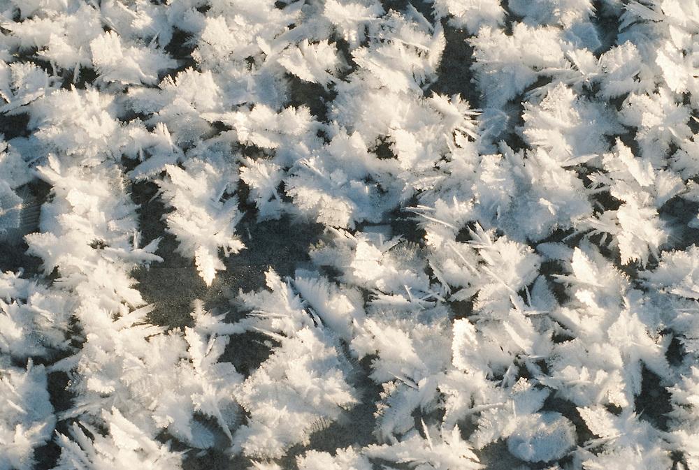 Alaska. Ice crystals on windowpane.