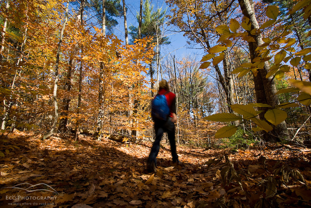 A woman hikes on an old woods road near Page Brook and Lake Winnipesauke in Meredith, New Hampshire.