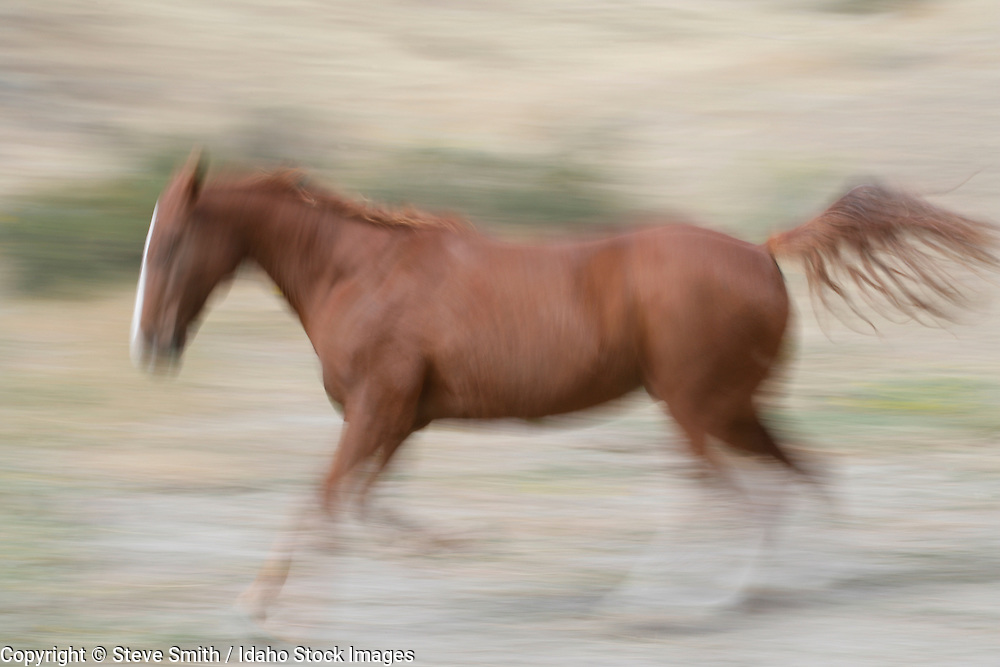 Full body profile of a horse galloping, in motion. Boise, Idaho.