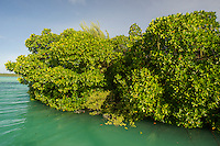 Mangoves growing in the lagoon of the St Joseph Atoll, D'Arros Island and St Joseph Atoll, Amirantees, Seychelles