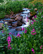A delightful creek found in the Indian Peaks Wilderness.<br />