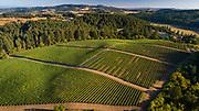 Drone aerial photos over Patricia Green Cellars estate vineayrd, Ribbon Ridge AVA, Willamette Valley, Oregon
