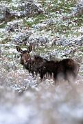 Mangy Moose in Big Sky, Montana