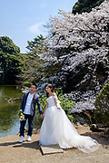 Shinjukugyoen is one of the biggest parks in Tokyo and a very popular hanami (cherry blossom viewing) destination. People gather under the blooming trees to have a small meal, for a stroll and for making their wedding photos.