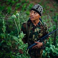 HSSU 20150409 TNLA kapinallisryhmä Shanin osavaltiossa, Myanmar. TNLA sotilas ja isot unikon kukat. Kuva: Benjamin Suomela