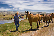 In the region of the Upper Green River Basin traditional ranch life is threatened by the oil and gas development. These scenes depict ranch environment along the Green River and surrounding areas. Many of these ranchers are planning to put their places into conservation easements to preserve the environment and lifestyle here and to protect agains oil and gas development.
