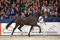 534, Kingsman<br /> KWPN Stallionshow - 's Hertogenbosch 2018<br /> © Hippo Foto - Dirk Caremans<br /> 03/02/2018