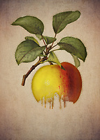 There are so many fascinating thoughts one can have, when looking closely at this wonderful fine art piece by Jan Keteleer. One of the first things you may think about are orchards. You can imagine trees filled with delicious apples of all shapes, sizes, and varieties. There is something compelling about this image.<br />
