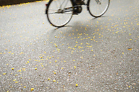 Bicycle on Road