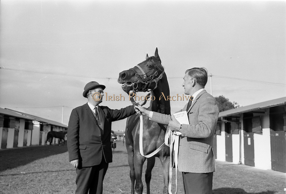 20/091967<br /> 09/20/1967<br /> 20 September 1967<br /> Goffs September Sales at Ballsbridge, Dublin. Picture shows Mr William Henley (left), Bridge Stud, Co Waterford, who owned the stallion that sired the yearling bay colt, sold for 2,300 guineas with Mr Jack Doyle, Shankhill, Co. Dublin who bought it.
