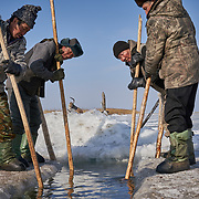 "Buryati ice fishermen in Selenga in the Kabansk region catching fish using horses on the ice at Russia's Lake Baikal. Crowned the ""Jewel of Siberia"", Baikal is the world's deepest lake, and the biggest lake by volume, holding 20% of the world's fresh water. In the winter, the lake 31,722 square meter surface is entirely frozen with ice averaging 2 meters thick."