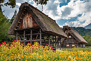 "Gassho-zukuri farmhouses with red & orange flowers. Ogimachi is the largest village and main attraction of the Shirakawa-go region, in Ono District, Gifu Prefecture, Japan. Declared a UNESCO World Heritage Site in 1995, Ogimachi village hosts several dozen well preserved gassho-zukuri farmhouses, some more than 250 years old. Their thick roofs, made without nails, are designed withstand harsh, snowy winters and to protect a large attic space that was formerly used to cultivate silkworms. Many of the farmhouses are now restaurants, museums or minshuku lodging. Some farmhouses from surrounding villages have been relocated to the peaceful Gassho-zukuri Minka-en Outdoor Museum, across the river from the town center. Gassho-zukuri means ""constructed like hands in prayer"", as the farmhouses' steep thatched roofs resemble the hands of Buddhist monks pressed together in prayer."