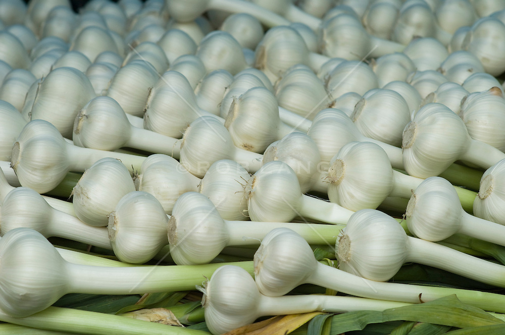 Detail of cleaned organically grown elephant garlic