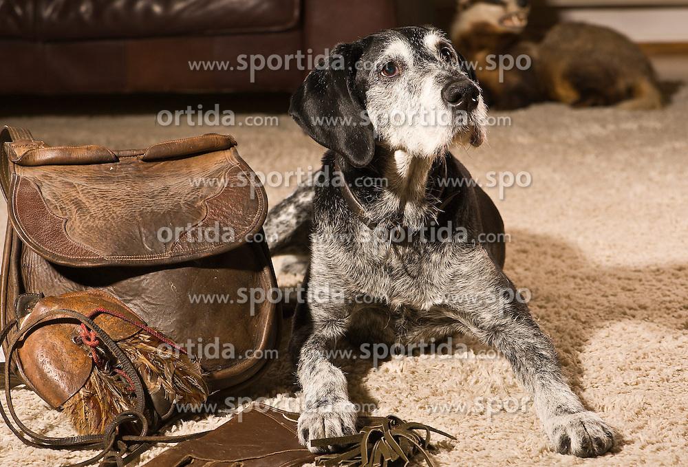 THEMENBILD - Der Deutsch Drahthaar ist eine Variante des deutschen rauhaarigen Vorstehhundes, der Ende des 19. Jahrhunderts gez&uuml;chtet wurde // The German Wirehaired Pointer is a variant of German wire-haired pointing dog that was bred end of the 19th century, pictured in Stuttgart, Germany on 2015/03/02. EXPA Pictures &copy; 2015, PhotoCredit: EXPA/ Eibner-Pressefoto/ Baumann<br /> <br /> *****ATTENTION - OUT of GER*****