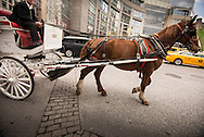 Horse drawn carriage on streets of New York City on April 21, 2015. (photo by Gabe Palacio)
