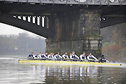 Putney, GREAT BRITAIN,    Bull on the Surrey station as both crews approach Barnes Rail Bridge, during the 2008 Varsity/Oxford University [OUBC] Trial Eights, raced over the championship course. Putney to Mortlake, on the River Thames. Thurs. 11.08.2008 [Mandatory Credit, Peter Spurrier/Intersport-images].Crews - .Bull, Bow. Colin KEOGH, 2. Douglas BRUCE, 3.Michal PLOTOWIAK, 4. David HOPPER, 5. Aaron MARCOVY, 6. Ben HARRISON, 7. Sjoerd HAMBURGER, Stroke Colin SMITH and Cox Philip CLAUSEN-THUE...Bear, Bow. Tim FARQUHARSON, 2. Ben ROSENBERGER, 3. Mike VALLI. 4. Alex HEARNE, 6 Tom SOLESBURY, 7 George BRIDGEWATER, Stroke, Ante KUSURI and Cox Adam BARHAMAND. Varsity Boat Race, Rowing Course: River Thames, Championship course, Putney to Mortlake 4.25 Miles,