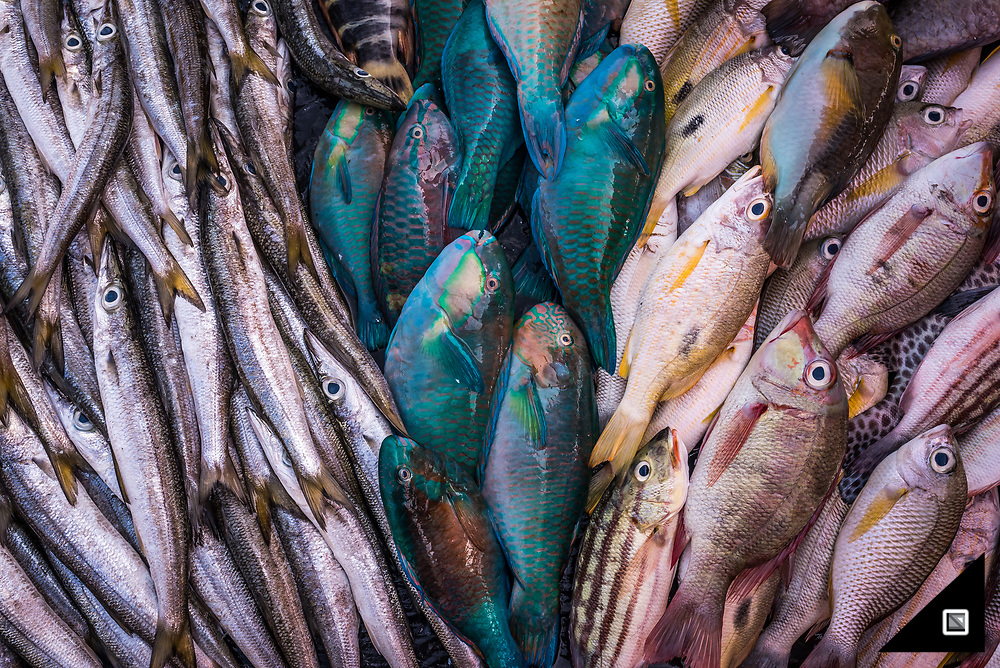 Fresh Reef Fish caught from Bajau off Semporna. Every day the street markets in Semporna sell their catch.