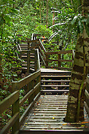 Boardwalk through the Daintree Rain Forest
