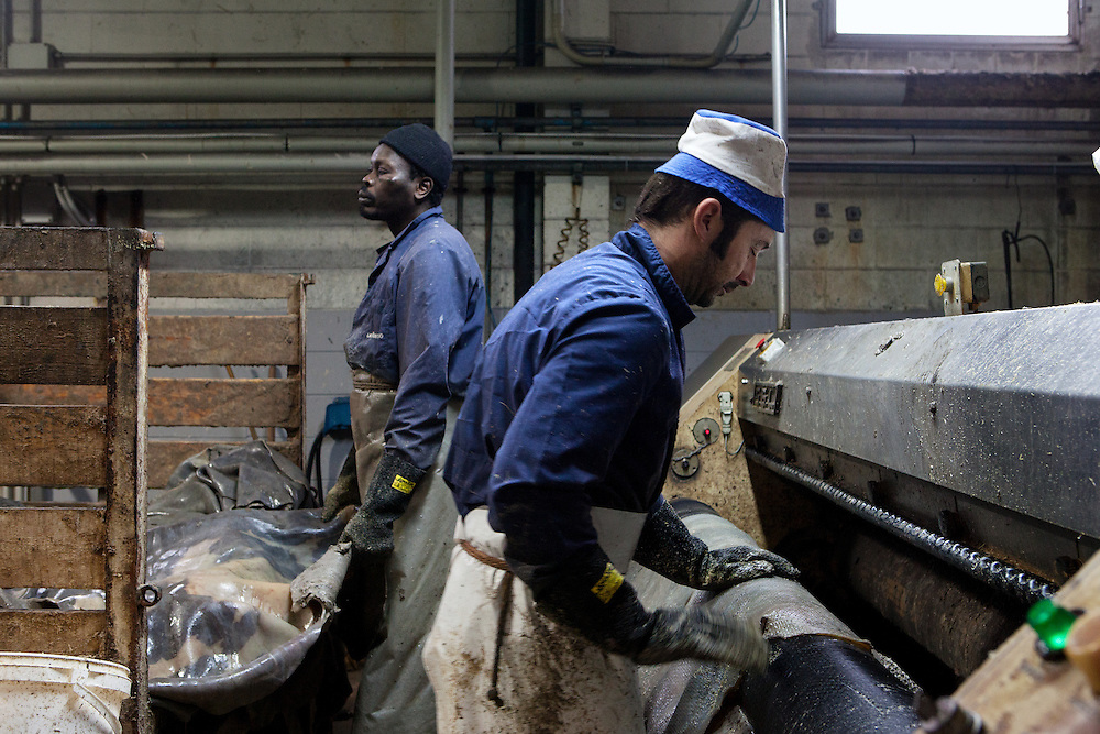 Ponte a Egola, Italy. Lamonti Cuoio tannery SPA. During the operation of degreasing and elimination of residues.