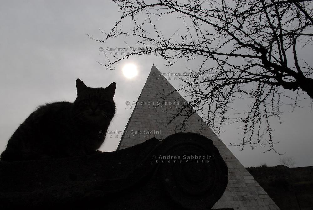Piramide Cestia e gatto.