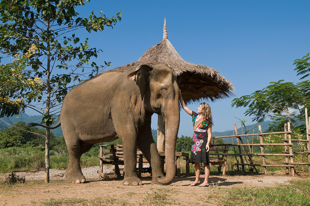 """Volunteer, Dianna Silva from Portugal, interacts with an elephant at the Elephant Nature Park near Chiang Mai, Thailand.  She says, """"It is my second time coming here.  For me Thailand is the best country.""""..Sangduen """"Lek"""" Chailert founded the park as a sanctuary and rescue centre for elephants.  The park currently has 32 elephants sponsored and supported by volunteers from all over the world."""