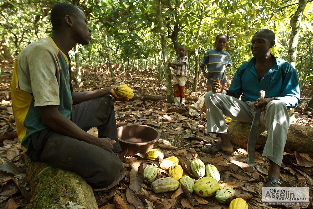 Daniel Apia Kouame Gboko (L) and his friend Severin crack cocoa pods on Daniel's cocoa plantation near the town of Moussadougou, Bas-Sassandra region, Cote d'Ivoire on Monday March 5, 2012.