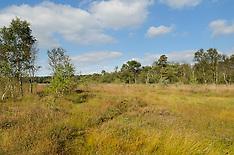 Wooldse veen, Natuurmonumenten, Winterswijk, Gelderland, Netherlands