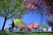 Harrisburg, PA, Riverfront Park, Flowering Spring Trees, Susquehanna River, Bicycling