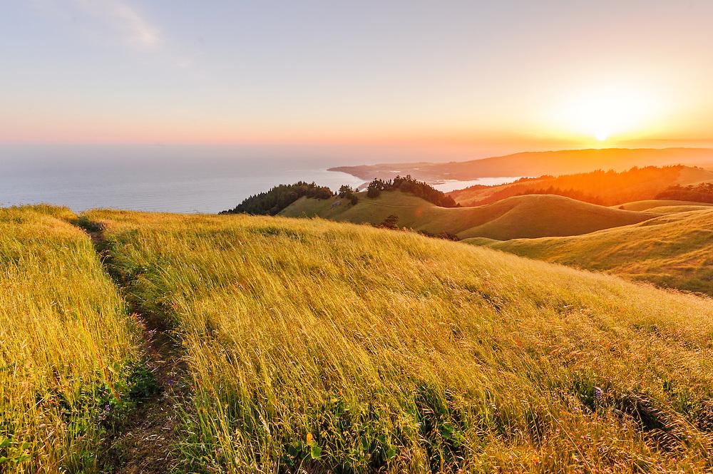 Mt. Tamalpais State Park, Mill Valley, California, Marin County
