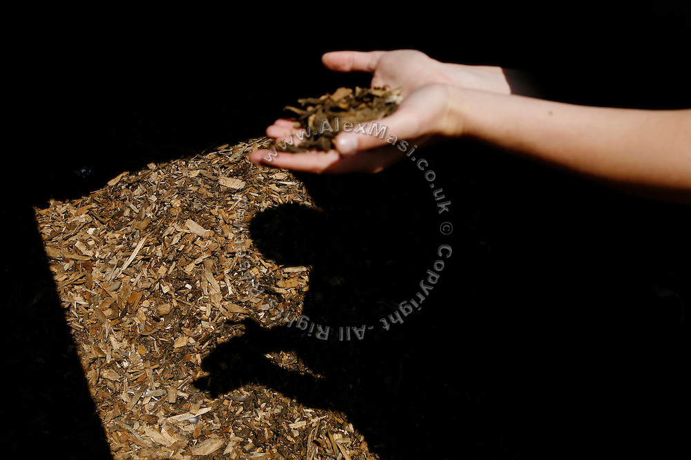 Jennie Organ, 30, Bio Regional Development Group's communication manager is showing the wood chips used to provide energy to the BedZED housing complex on Thursday, Sep. 6, 2007, in London, UK. BedZED or the Beddington Zero Energy Development, is an environmentally-friendly housing development near Wallington, England in the London Borough of Sutton. It was designed by the architect Bill Dunster who was looking for a more sustainable way of building housing in urban areas in partnership between the BioRegional Development Group and the Peabody Trust. There are 82 houses, 17 apartments and 1,405 square meters of work space were built between 2000. The project was shortlisted for the Stirling Prize in 2003. The project is designed to use only energy from renewable source generated on site. In addition to 777 square meters of solar panels, tree waste is used for heating and electricity. The houses face south to take advantage of solar gain, are triple glazed and have high thermal insulation while most rain water is collected and reused. Appliances are chosen to be water efficient and use recycled water wherever possible. Low impact building materials were selected from renewable or recycled sources and were all originating within a 35 mile radius of the site to minimize the energy required for transportation. Also, refuse collection facilities are designed to support recycling and the site encourage eco-friendly transport: electric and LPG cars have priority over petrol/diesel cars, and electricity is provided by parking spaces appositely built for charging electric cars.