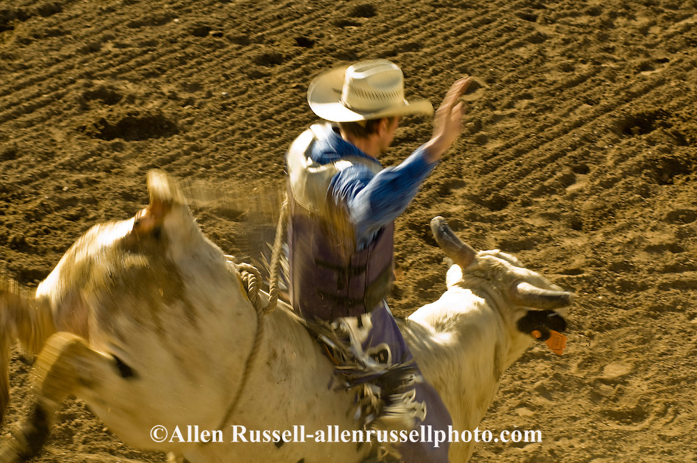 Bull Rider, Miles City Bucking Horse Sale, Montana, <br /> MODEL RELEASED