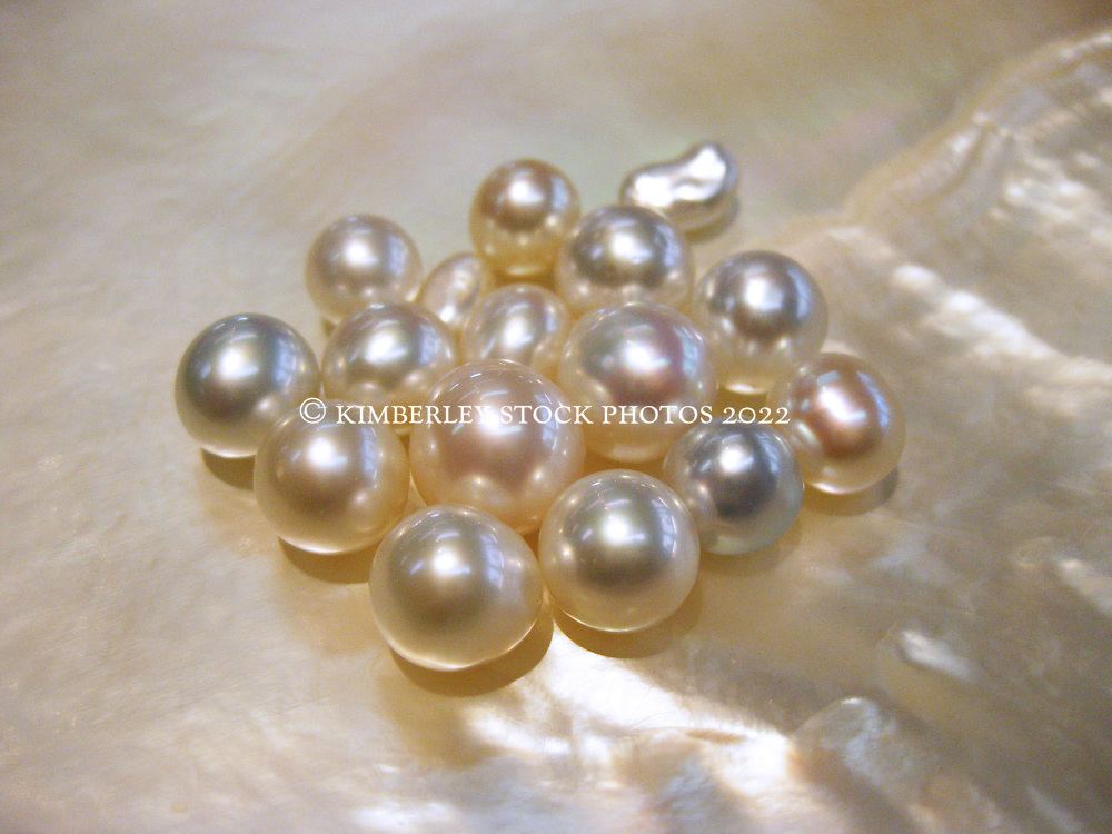 Cultured and keshi pearls lie in a pearl shell from the oyster Pinctada maxima, the gold or silver lipped oyster.  Broome is famous for its south sea pearls.