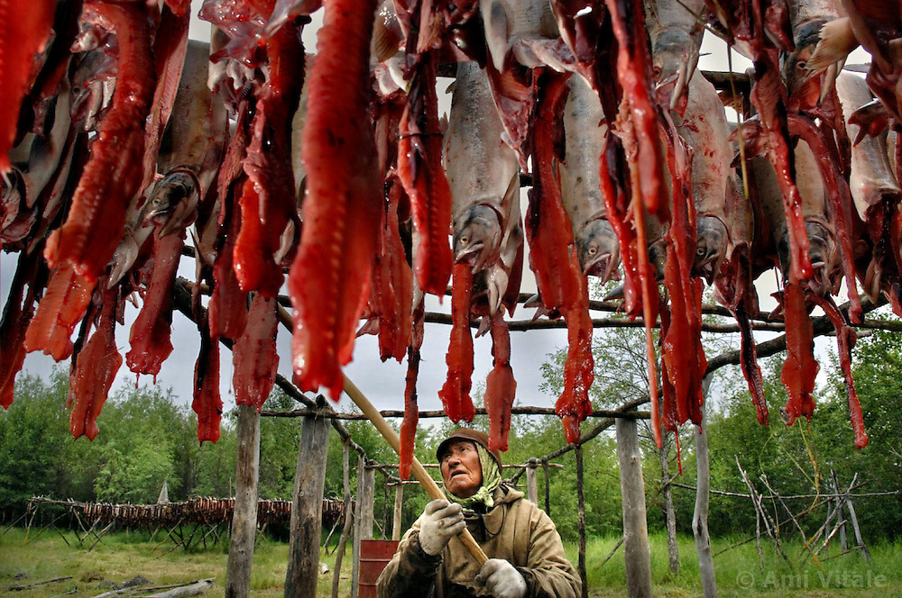 Akuguk Roman Cholkovich (74), an indigenous Chukchu tribal hangs salmon at their summer fishing camp along the river Vyvenka in Khailino, Kamchatka. His family along with other indigenous families are most vulnerable to the dwindling salmon stocks as they rely on it as a main source of protein for the entire year. Poaching in Kamchatka is on such a large scale that, like the sturgeon, the Pacific salmon is at risk of disappearing altogether. The economy is struggling and the only way for most people to survive is through poaching and fishing in the short summer months. So now the fish population is rapidly declining as poachers collect the eggs and don't allow the salmon to spawn for the next generations