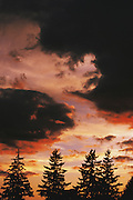 Clouds over evergreen trees