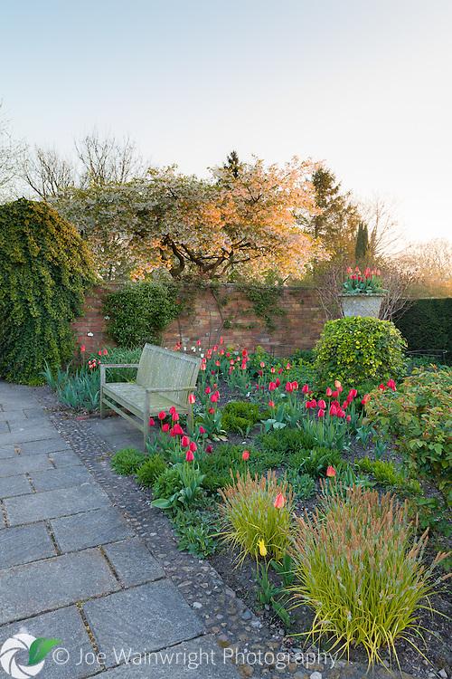 Dawn in the Lanhydrock Garden at Wollerton Old Hall Garden, Shropshire