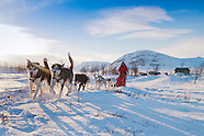 Riding with the King, dogsledding over the 'Kungsleden', Kings trail, of Swedish Lapland
