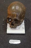 Crânio de Homo sapiens, aproximadamente 2000 anos de idade,  Nível de Sambaqui, encontrado em Cananéia - SP. Museu Geológico Valdemar Lefèvre, São Paulo - SP, 07/2014.