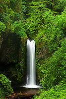 Weisndanger Falls in the Columbia River Gorge.
