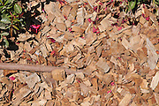 Drip Irrigation of a garden an efficient way to save water. Wood shavings are used to reduce evaporation