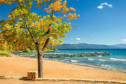 """Autumn Tree at Kings Beach 2"" - Photograph of a tree with fall colored leaves along the shore of Kings Beach, Lake Tahoe."