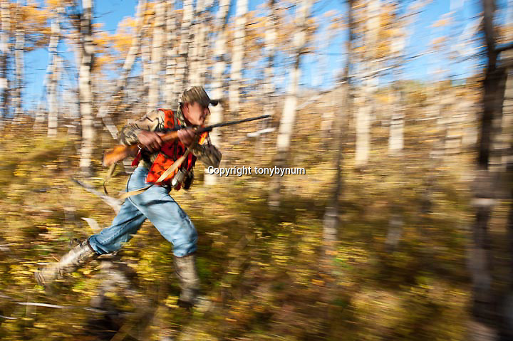 hunter rushing to get a shot edge of aspen trees, motion blur