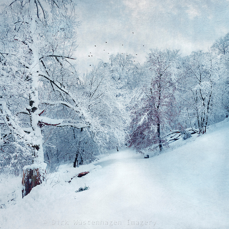 snow covered landscape - texturized photo
