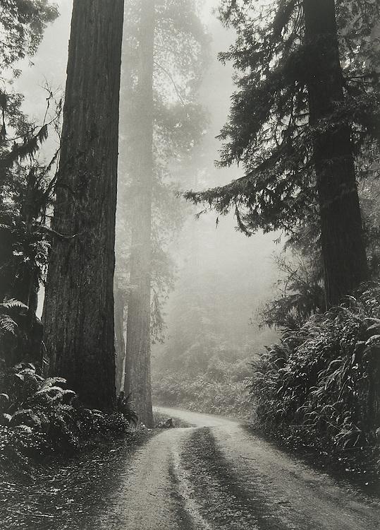North Coast Redwoods, Winter